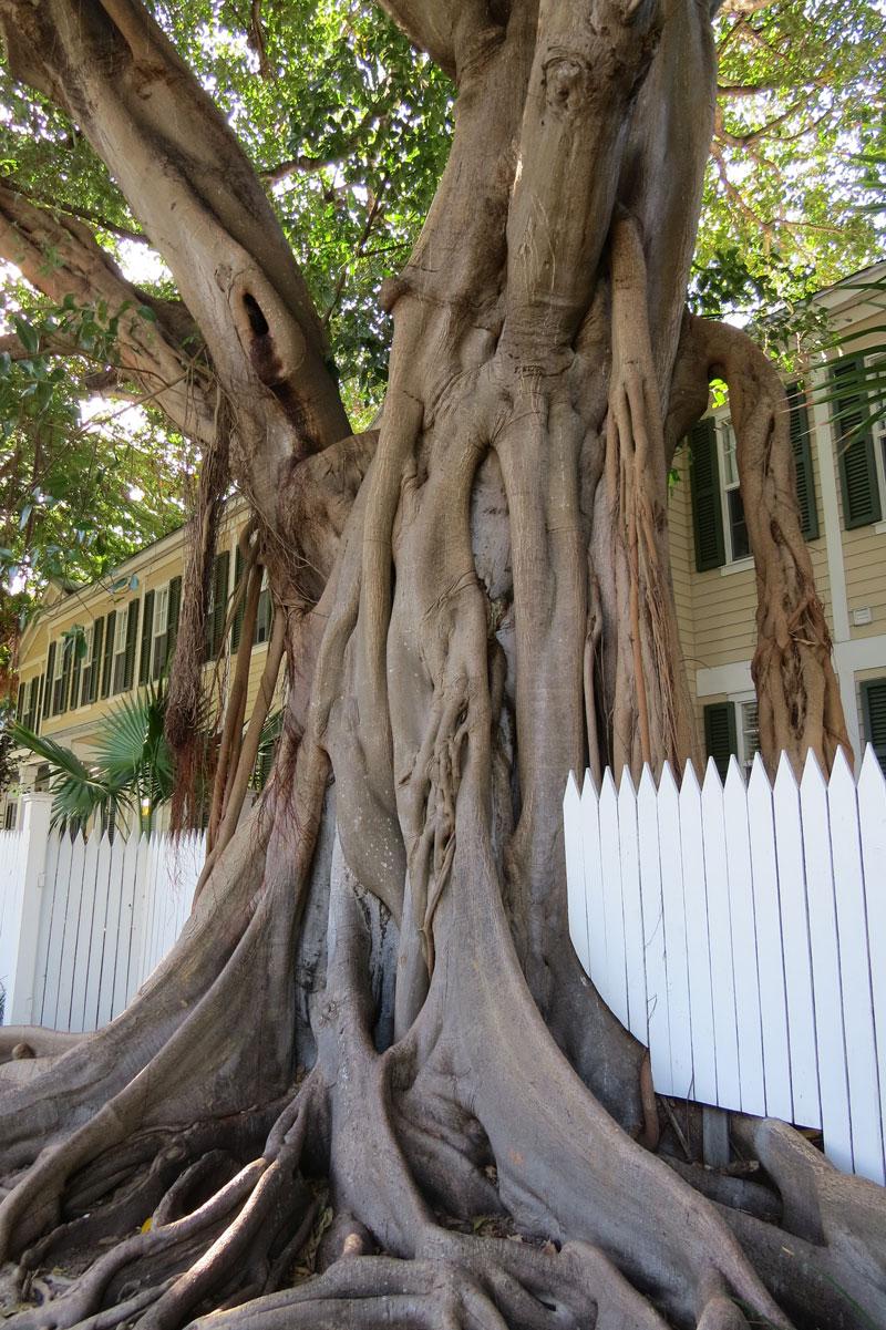 Key West Boom