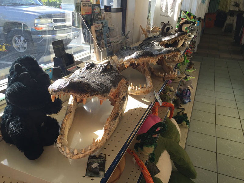 Bij het tankstation verkopen ze gator heads van gekweekte alligators