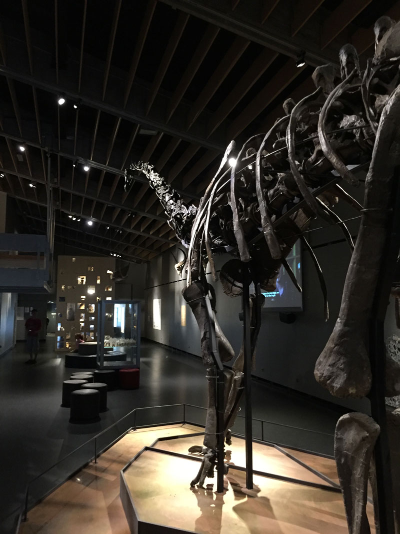 Zoölogisch museum Kopenhagen