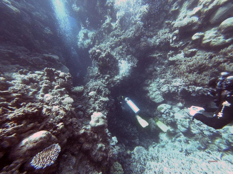 Duiken op het Great Barrier Reef