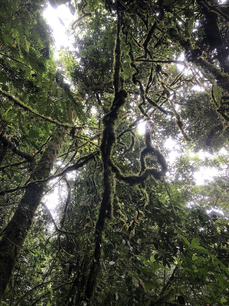 Monteverde Cloud Forest Costa Rica.