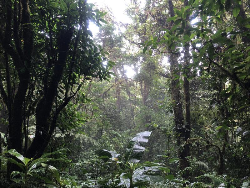 Tropisch regenwoud in Costa Rica.
