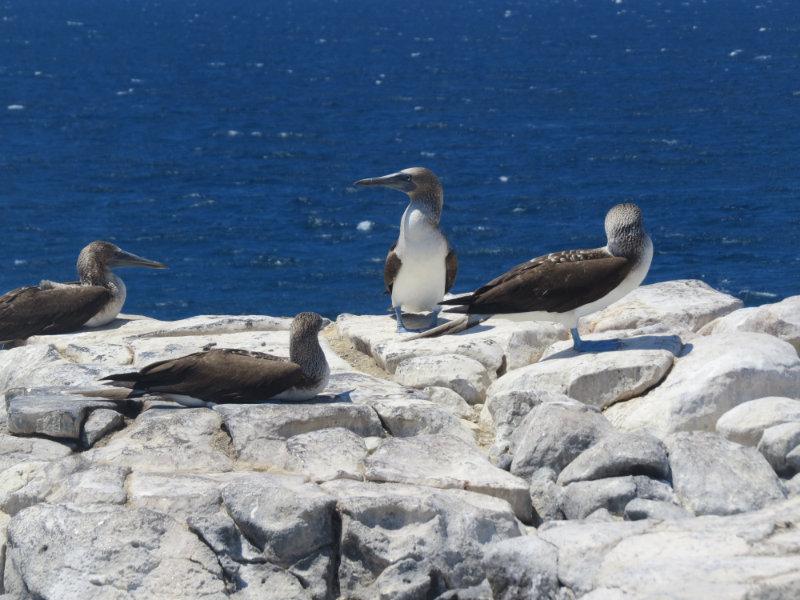 Meer over de Galapagos